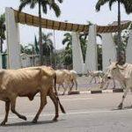 Presidential Villa, Abuja with cows roaming